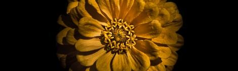 Backyard Flowers 58 Color Version