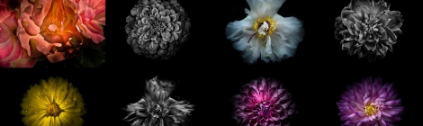 The Learning Curve Photography 2019 Flowers Calendar